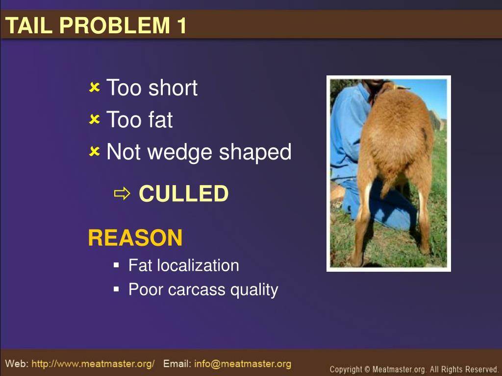 TAIL PROBLEM 1