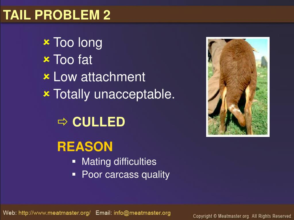 TAIL PROBLEM 2