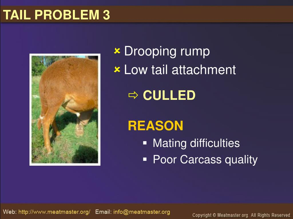 TAIL PROBLEM 3