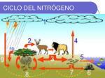 ciclo del nitr geno