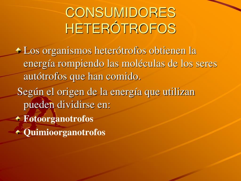 CONSUMIDORES HETERÓTROFOS