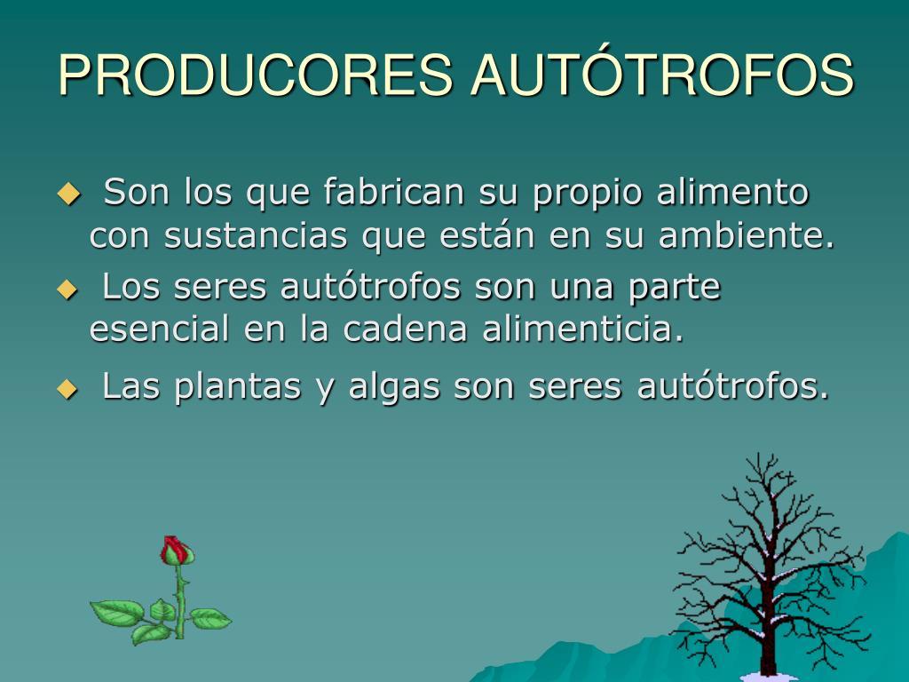PRODUCORES AUTÓTROFOS