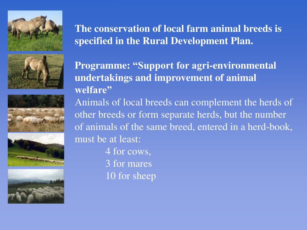 The conservation of local farm animal breeds is specified in the Rural Development Plan.