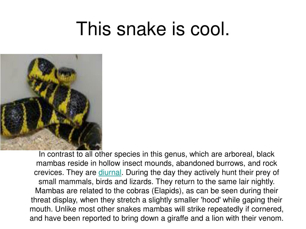 This snake is cool.