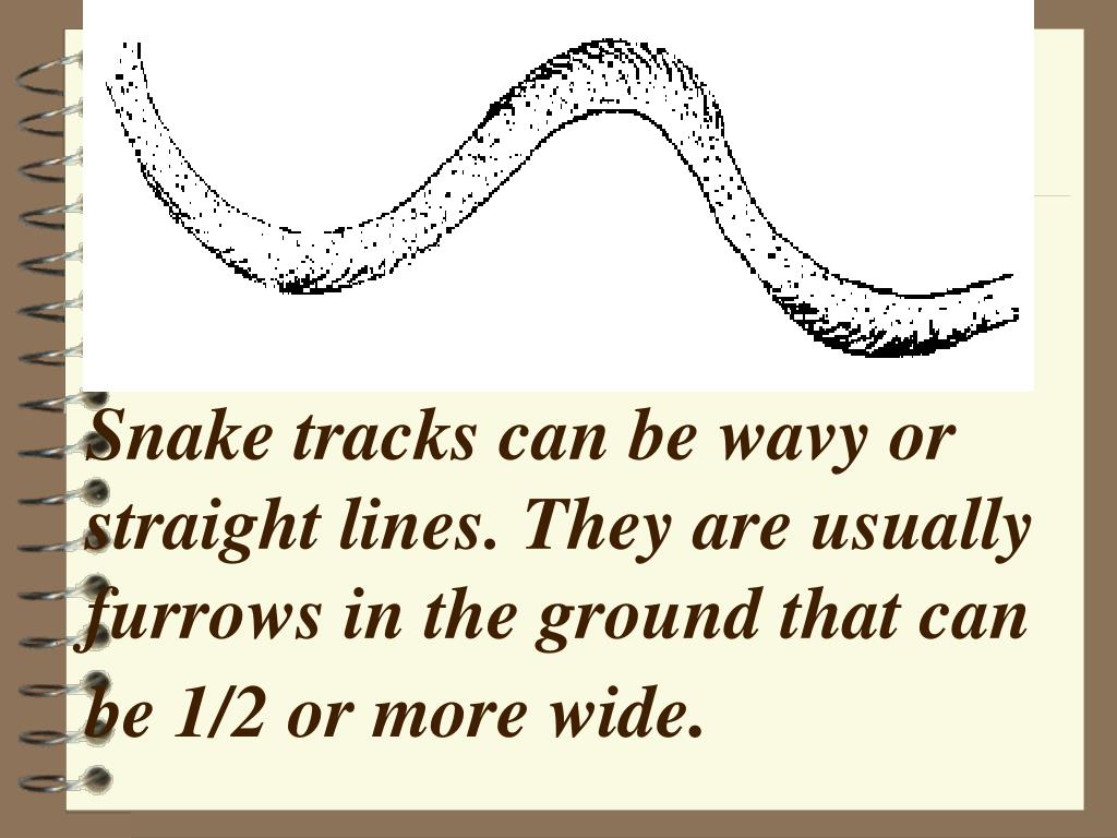 Snake tracks can be wavy or straight lines. They are usually furrows in the ground that can be 1/2 or more wide
