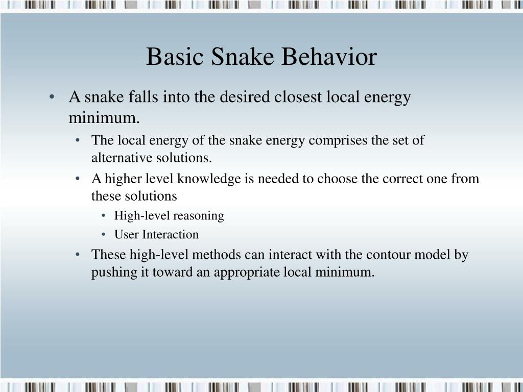 Basic Snake Behavior