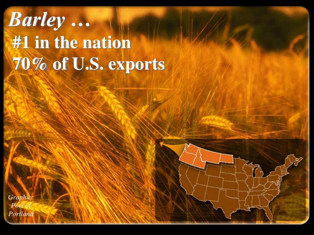 Barley …