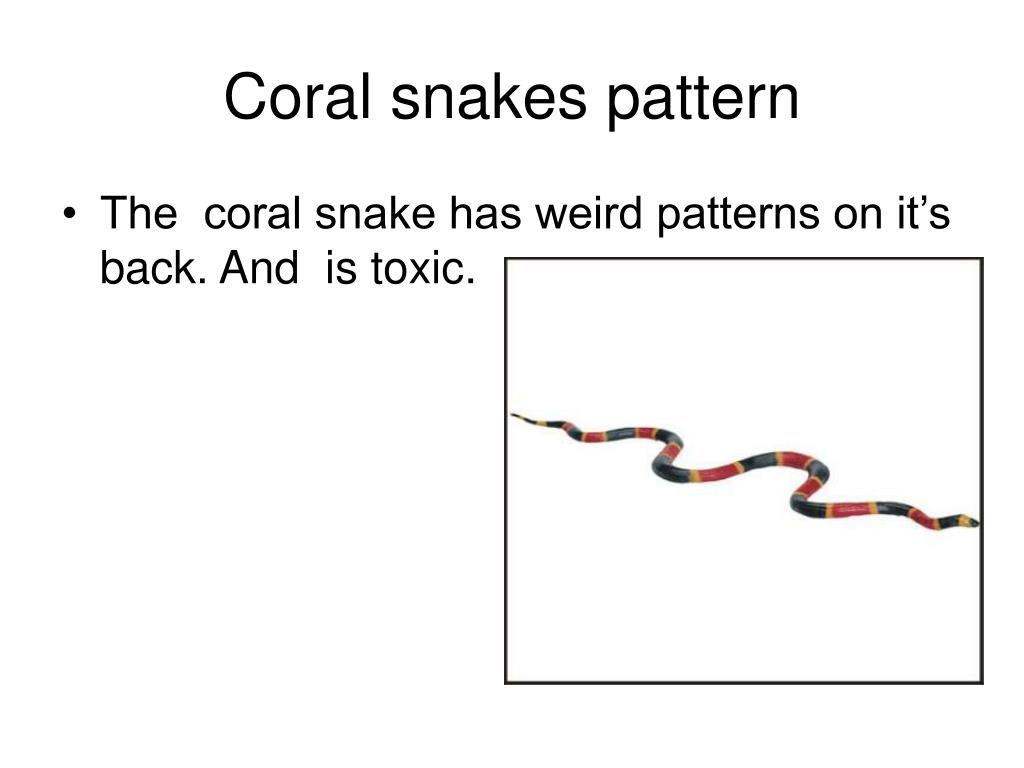 Coral snakes pattern