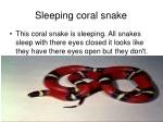 sleeping coral snake
