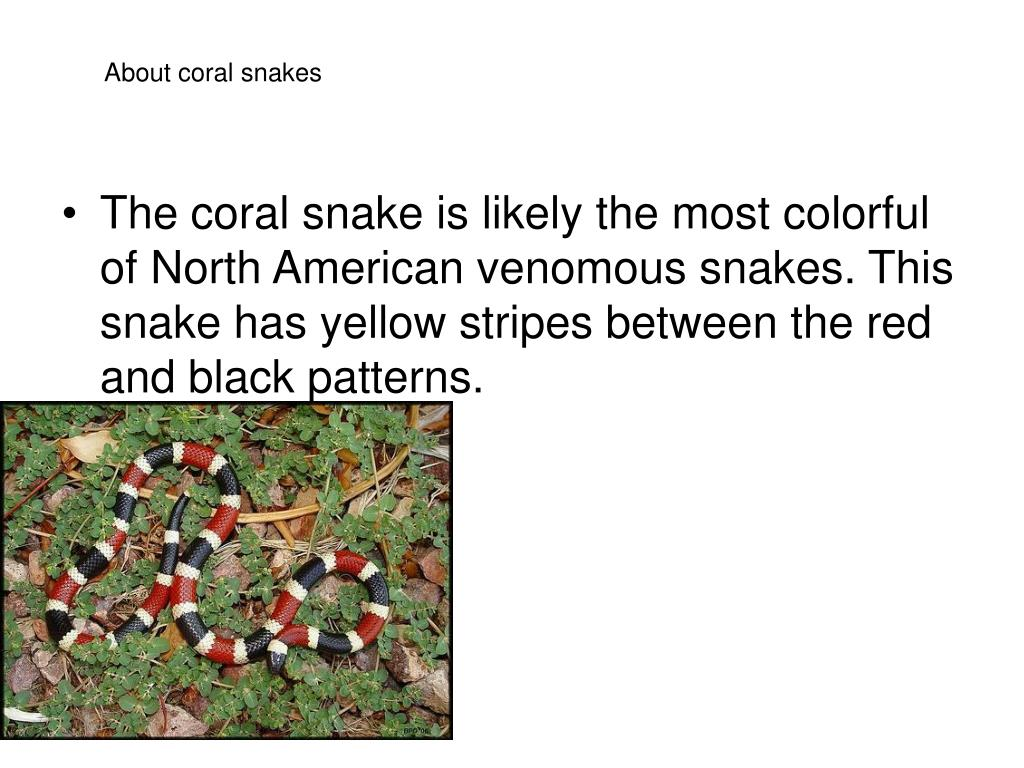 About coral snakes