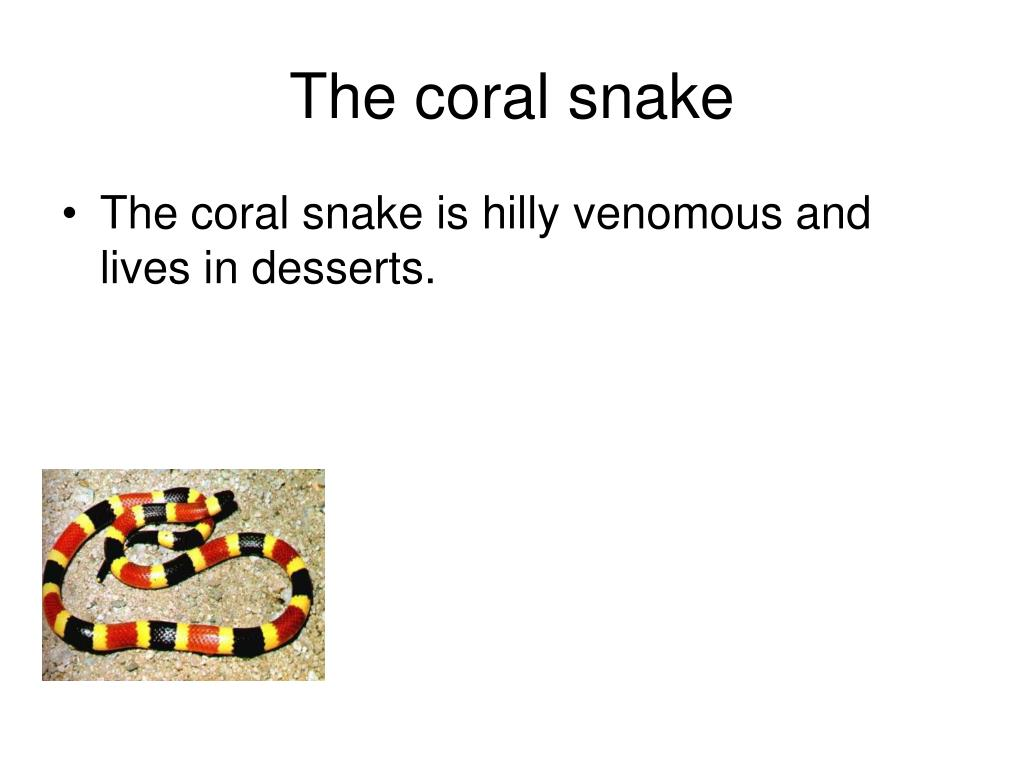 The coral snake