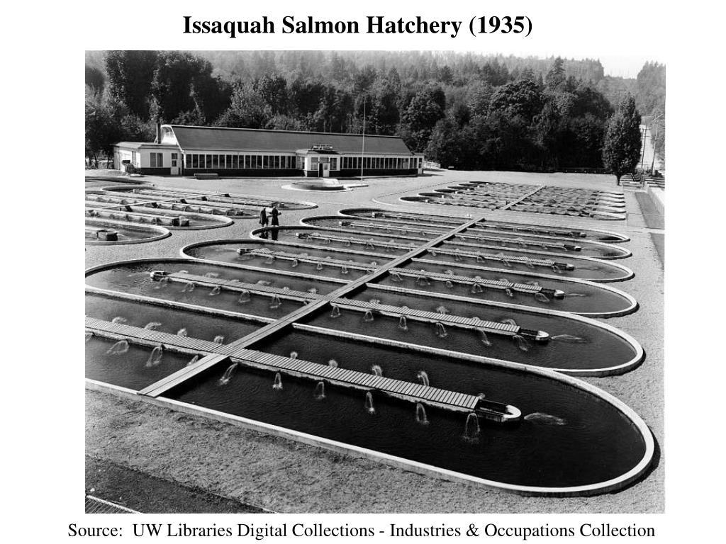 Issaquah Salmon Hatchery (1935)