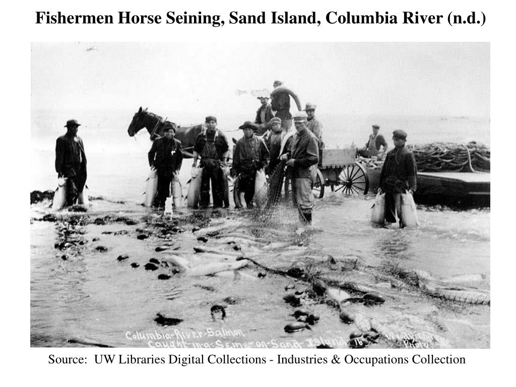 Fishermen Horse Seining, Sand Island, Columbia River (n.d.)