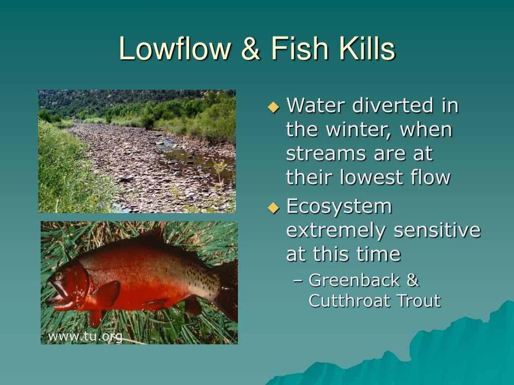 Lowflow & Fish Kills