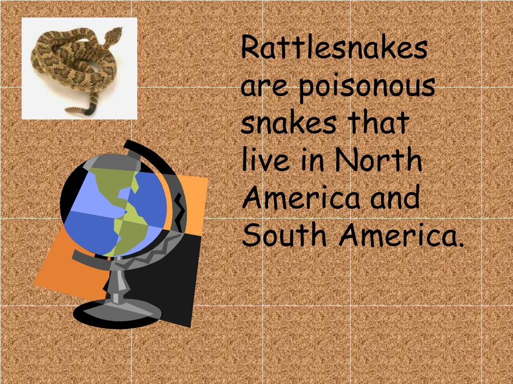 Rattlesnakes are poisonous snakes that live in North America and South America.