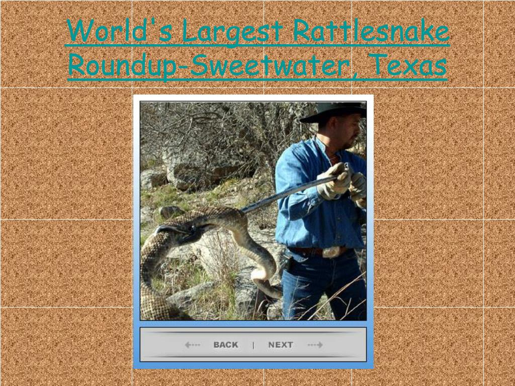World's Largest Rattlesnake Roundup-Sweetwater, Texas