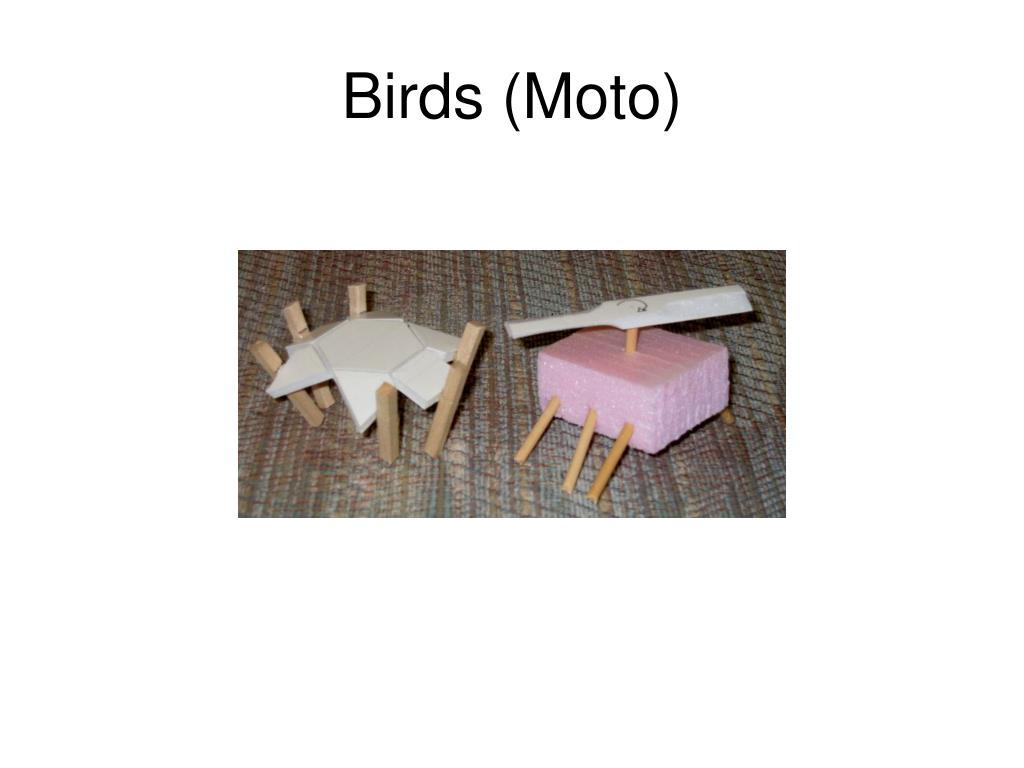 Birds (Moto)
