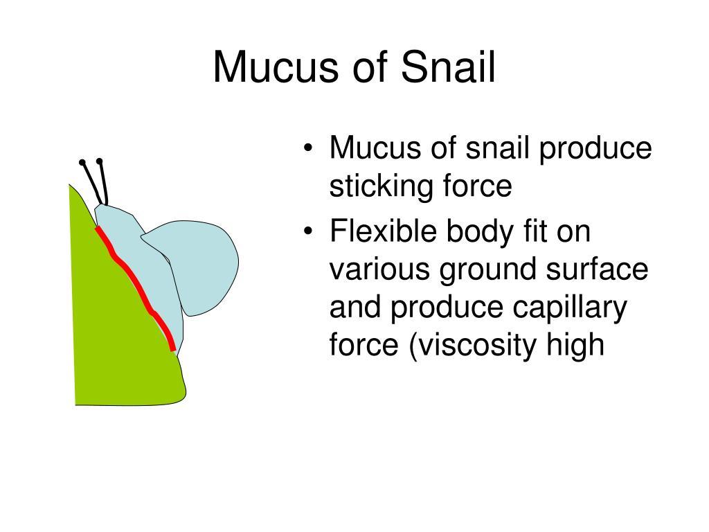 Mucus of Snail