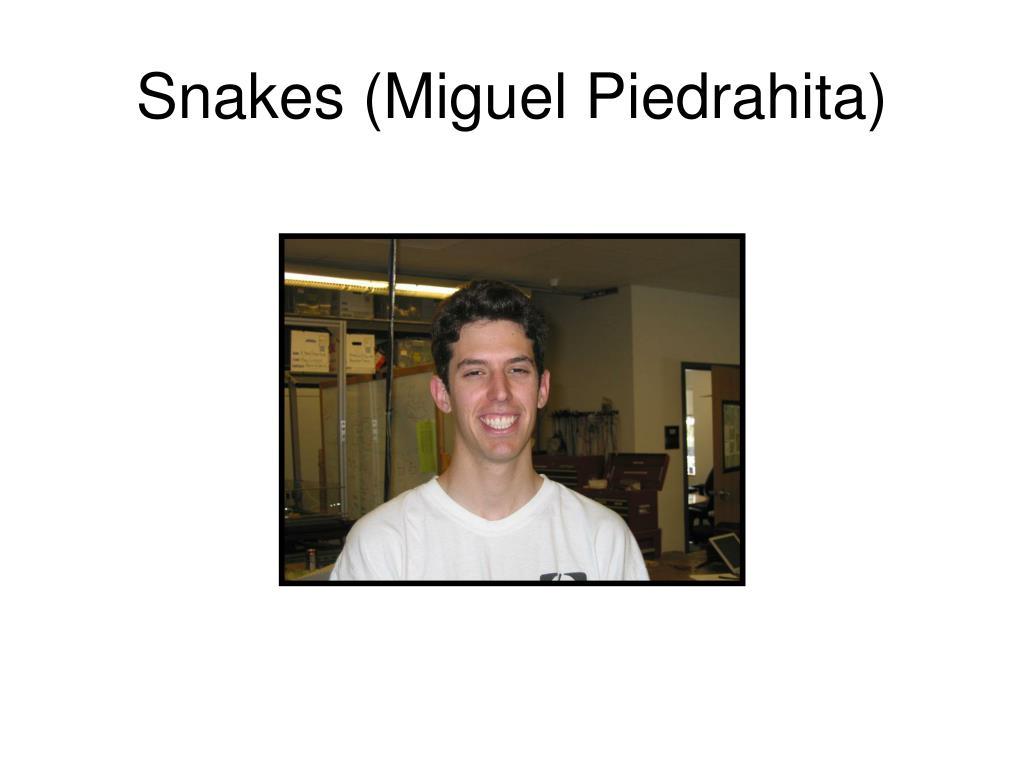 Snakes (Miguel Piedrahita)