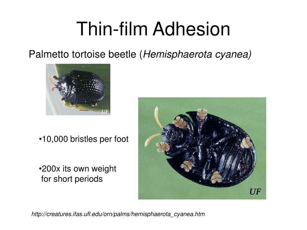 Thin-film Adhesion