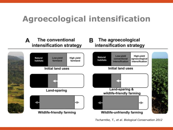 Agroecological intensification