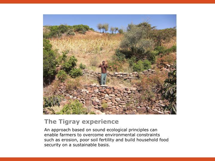 The Tigray experience