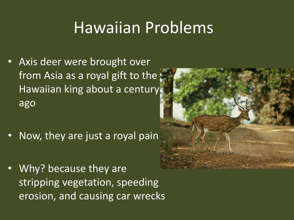 Hawaiian Problems
