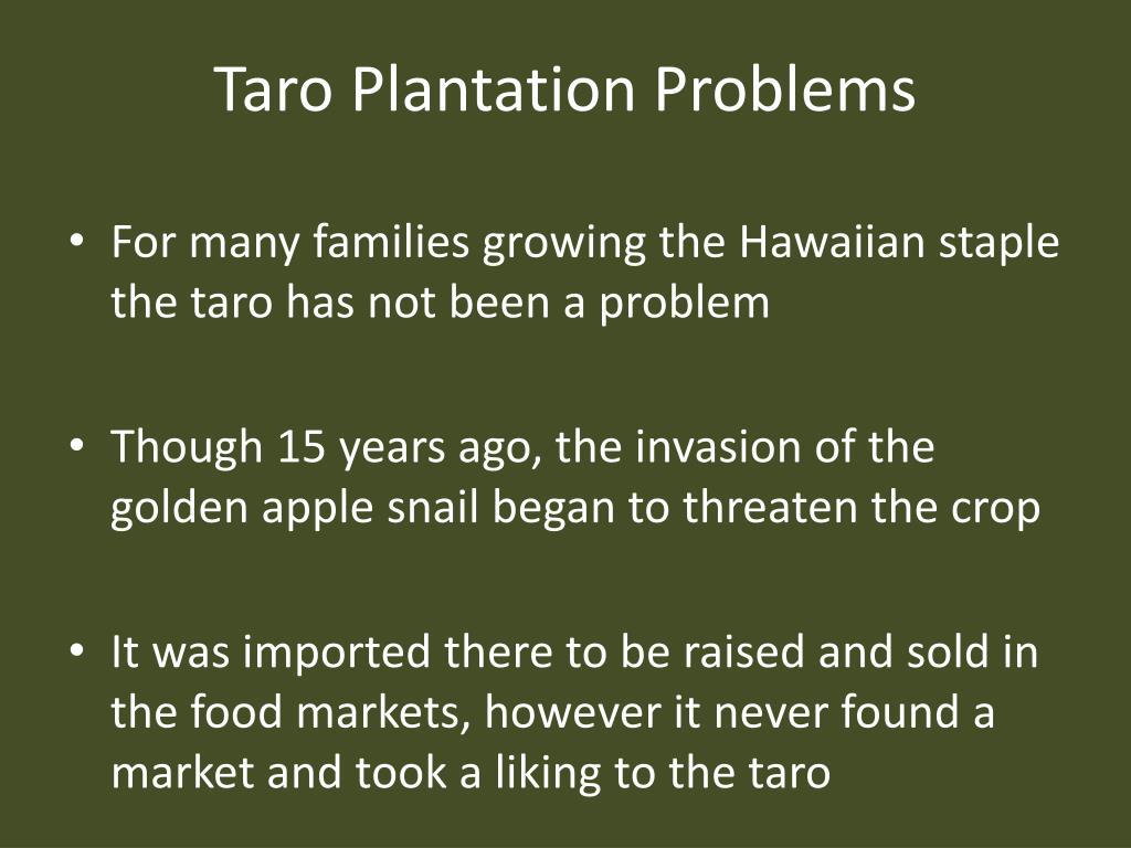 Taro Plantation Problems