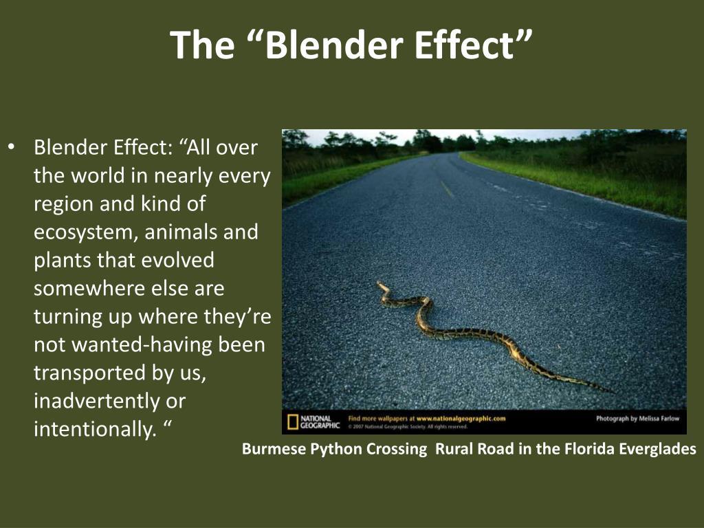 """The """"Blender Effect"""""""