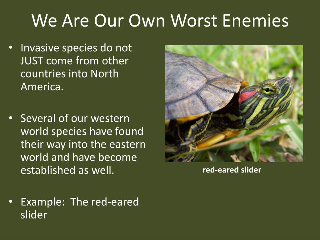 We Are Our Own Worst Enemies