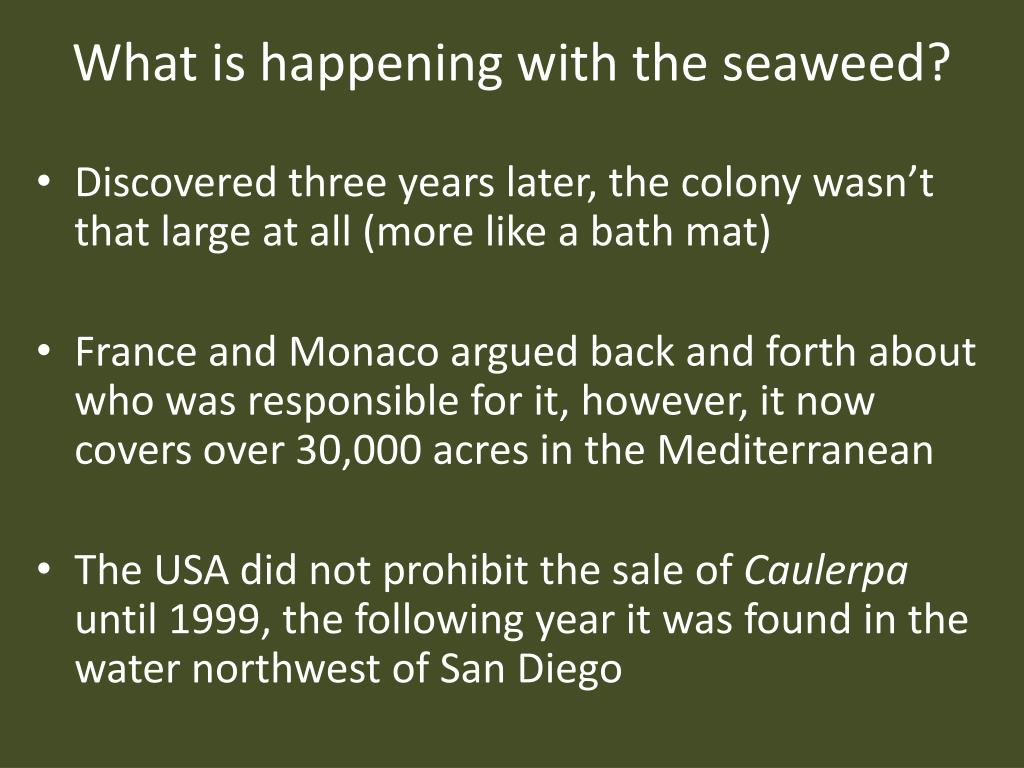 What is happening with the seaweed?