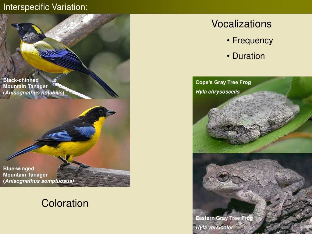 Interspecific Variation:
