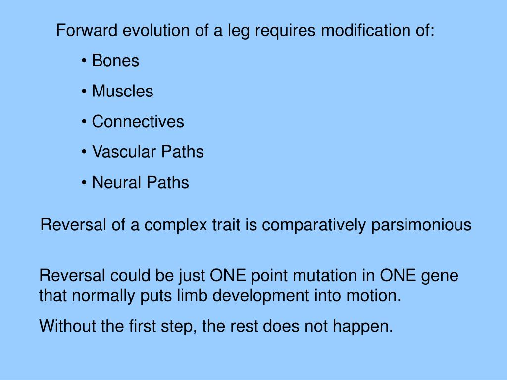 Forward evolution of a leg requires modification of:
