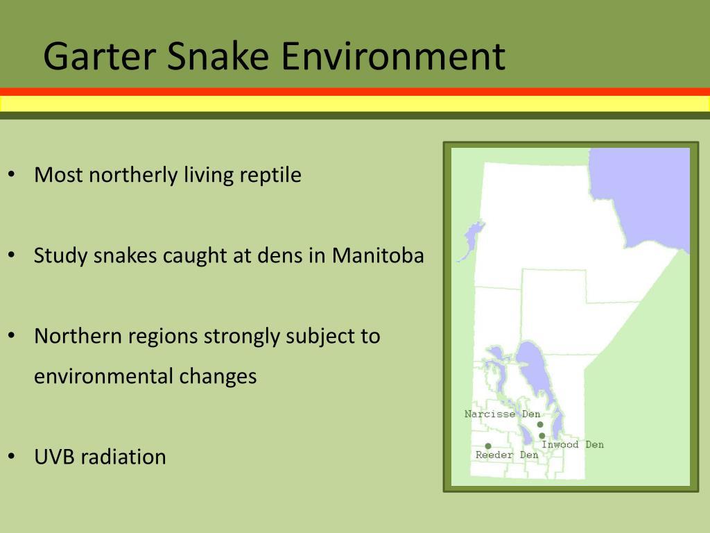 Garter Snake Environment