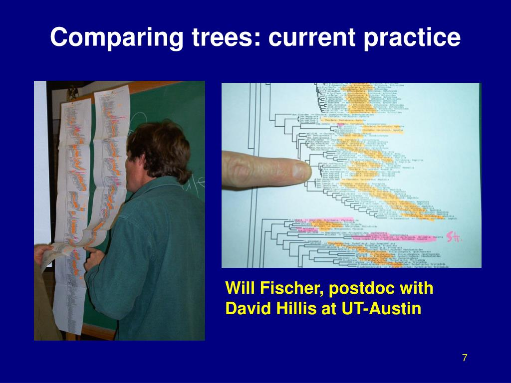 Comparing trees: current practice