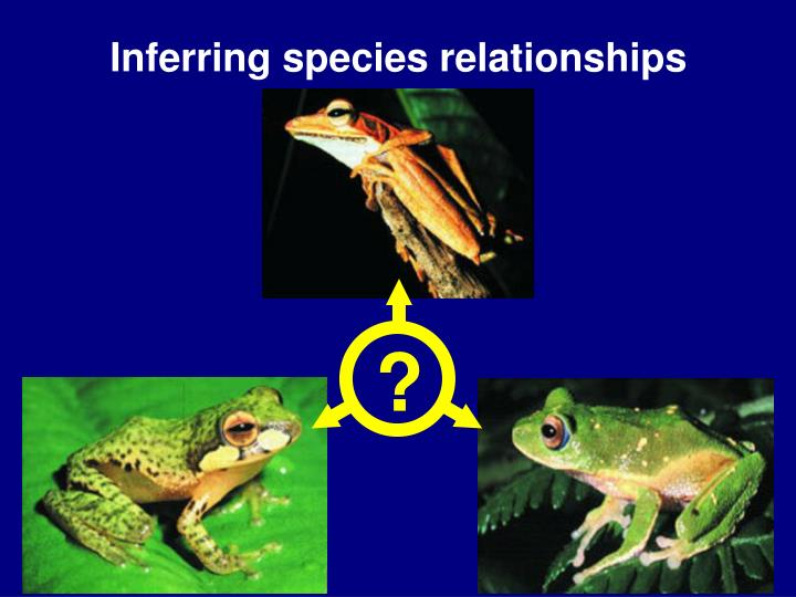 Inferring species relationships l.jpg