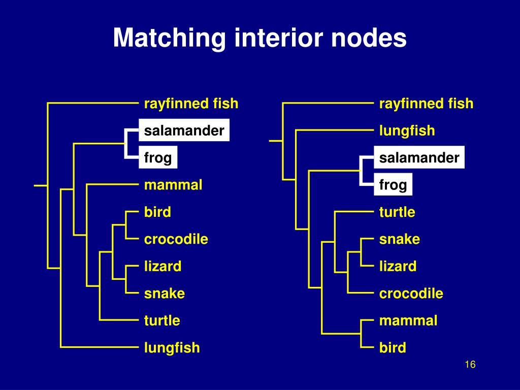 Matching interior nodes