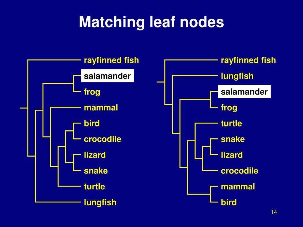 Matching leaf nodes