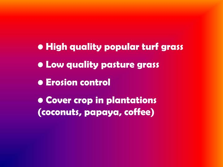High quality popular turf grass