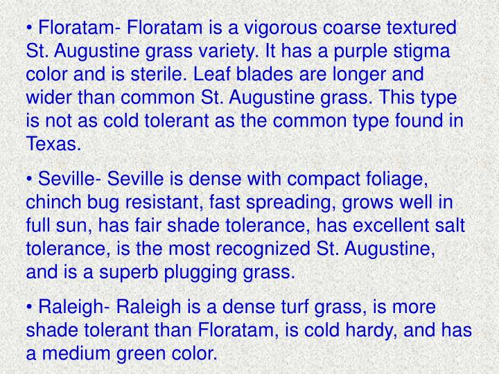 Floratam- Floratam is a vigorous coarse textured St. Augustine grass variety. It has a purple stigma color and is sterile. Leaf blades are longer and wider than common St. Augustine grass. This type is not as cold tolerant as the common type found in Texas.