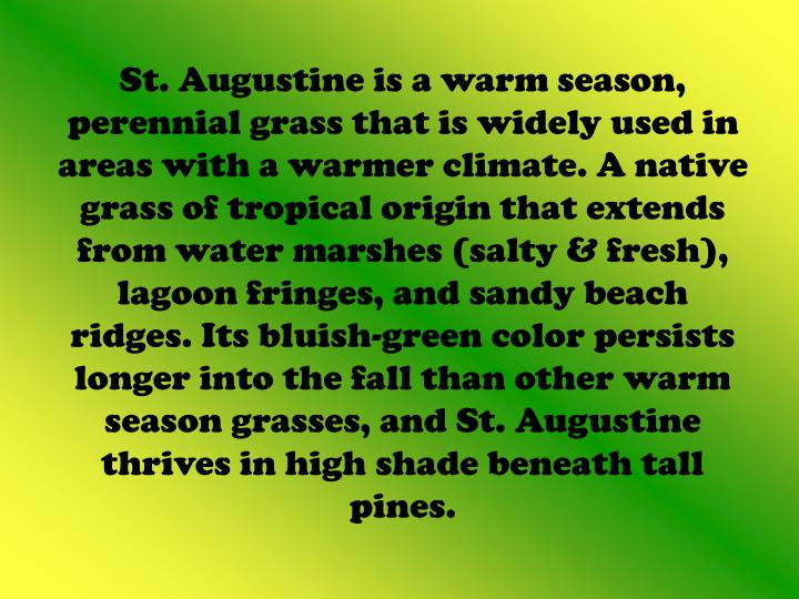 St. Augustine is a warm season, perennial grass that is widely used in areas with a warmer climate. A native grass of tropical origin that extends from water marshes (salty & fresh), lagoon fringes, and sandy beach ridges. Its bluish-green color persists longer into the fall than other warm season grasses, and St. Augustine thrives in high shade beneath tall pines.