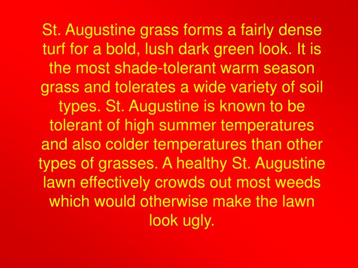 St. Augustine grass forms a fairly dense turf for a bold, lush dark green look. It is the most shade-tolerant warm season grass and tolerates a wide variety of soil types. St. Augustine is known to be tolerant of high summer temperatures and also colder temperatures than other types of grasses. A healthy St. Augustine lawn effectively crowds out most weeds which would otherwise make the lawn look ugly.