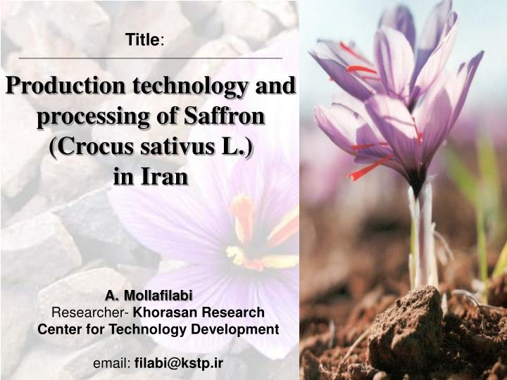 Production technology and processing of saffron crocus sativus l in iran