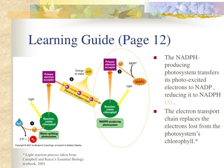 Learning Guide (Page 12)