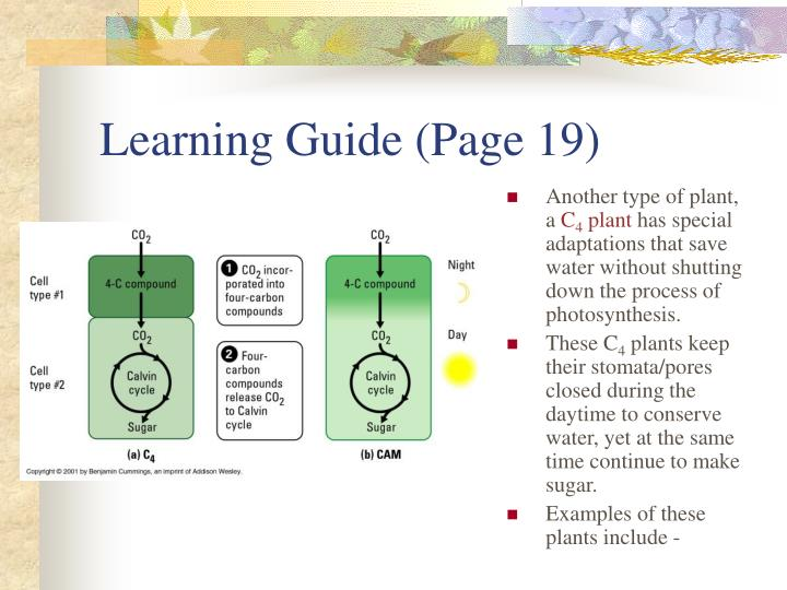 Learning Guide (Page 19)