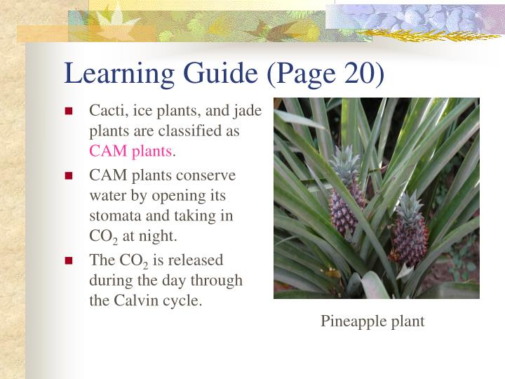 Learning Guide (Page 20)