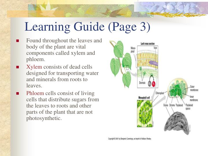 Learning Guide (Page 3)
