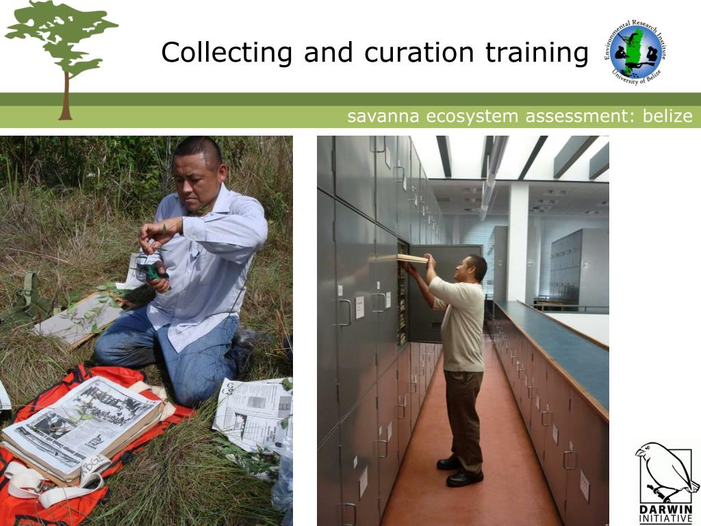 Collecting and curation training