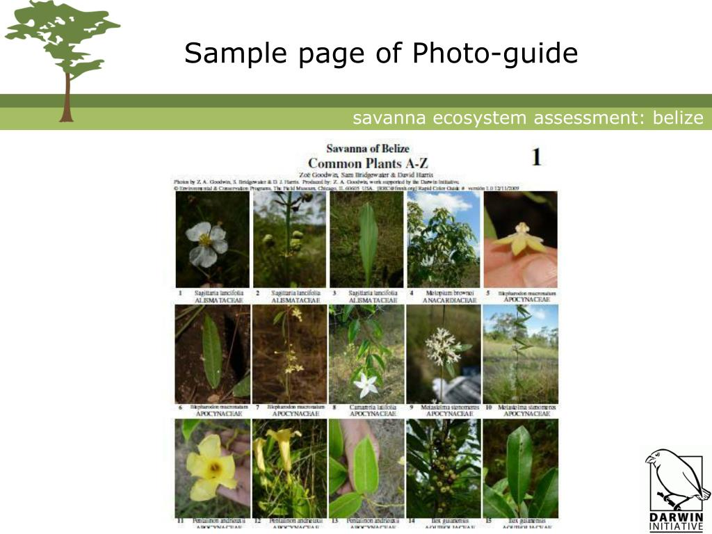 Sample page of Photo-guide