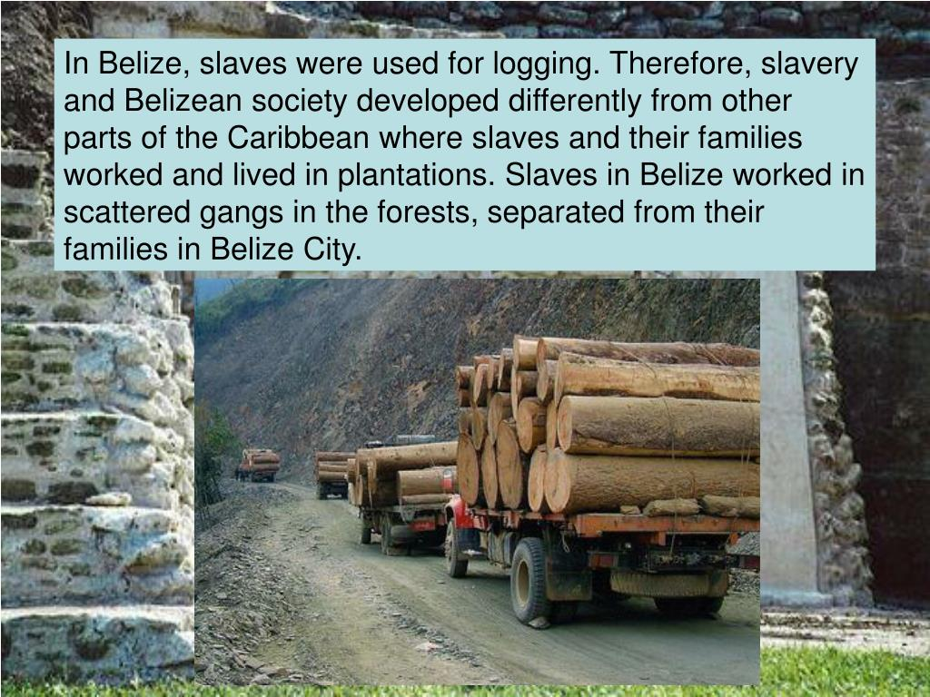 In Belize, slaves were used for logging. Therefore, slavery and Belizean society developed differently from other parts of the Caribbean where slaves and their families worked and lived in plantations. Slaves in Belize worked in scattered gangs in the forests, separated from their families in Belize City.
